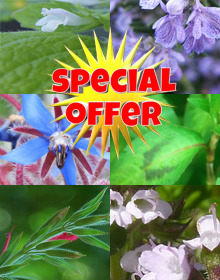 Hetty's Summer Selection Special