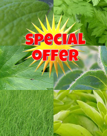 Hetty's Autumn Selection Special