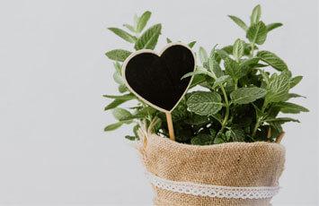 Garden Kit & Gift Ideas