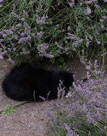 Catnep & Catmint Herb Duo