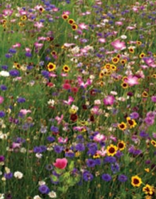 Wildflower Seed Meadow Mix Cottage Garden