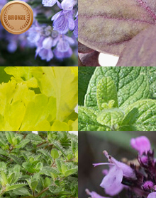 Hetty's Bronze Herb Selection