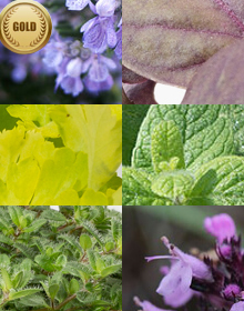Hetty's Gold Herb Selection
