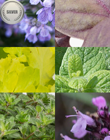 Hetty's Silver Herb Selection
