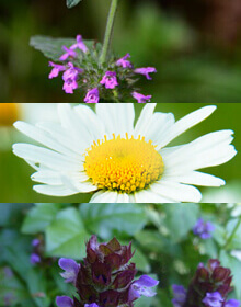 Wildflower Plant Collection