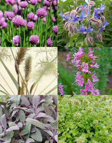 Pollinator Herb Collection